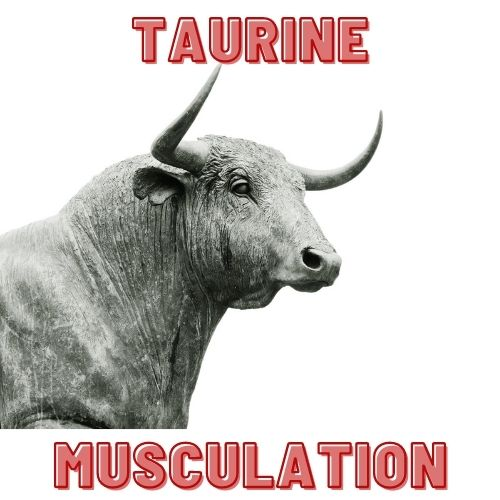 taurine musculation effets avis dose